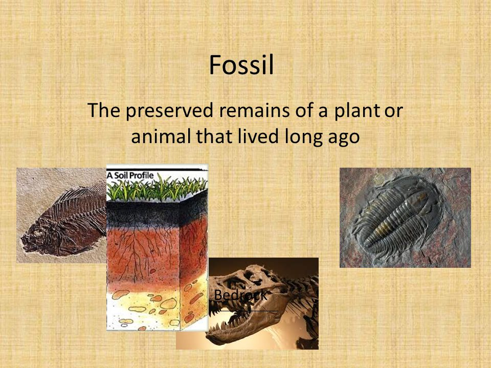 Fossil The preserved remains of a plant or animal that lived long ago Bedrock