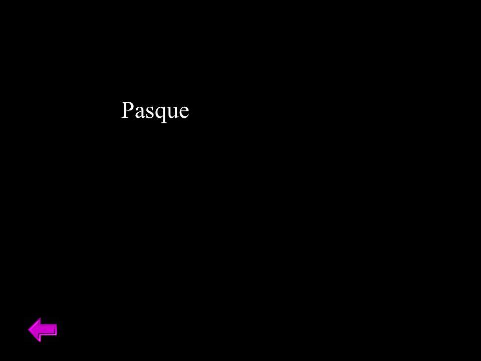 Pasque