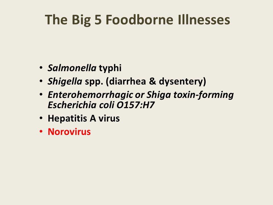 The Big 5 Foodborne Illnesses Salmonella typhi Shigella spp. (diarrhea & dysentery) Enterohemorrhagic or Shiga toxin-forming Escherichia coli O157:H7