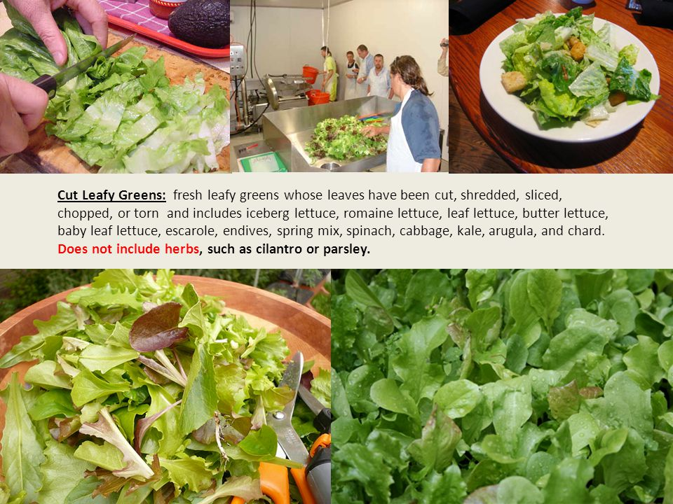 Cut Leafy Greens: fresh leafy greens whose leaves have been cut, shredded, sliced, chopped, or torn and includes iceberg lettuce, romaine lettuce, leaf lettuce, butter lettuce, baby leaf lettuce, escarole, endives, spring mix, spinach, cabbage, kale, arugula, and chard.
