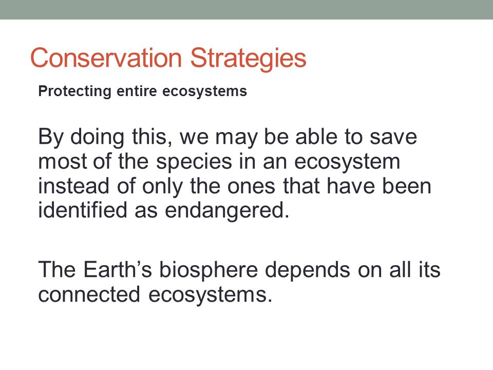 Conservation Strategies Protecting entire ecosystems By doing this, we may be able to save most of the species in an ecosystem instead of only the one
