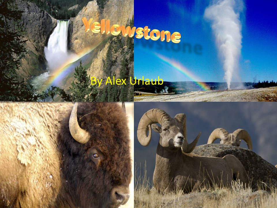 Yellowstone has high levels of volcanic activity in it, in fact it is a volcano, causing geysers, hot springs and mud-pots to emerge.