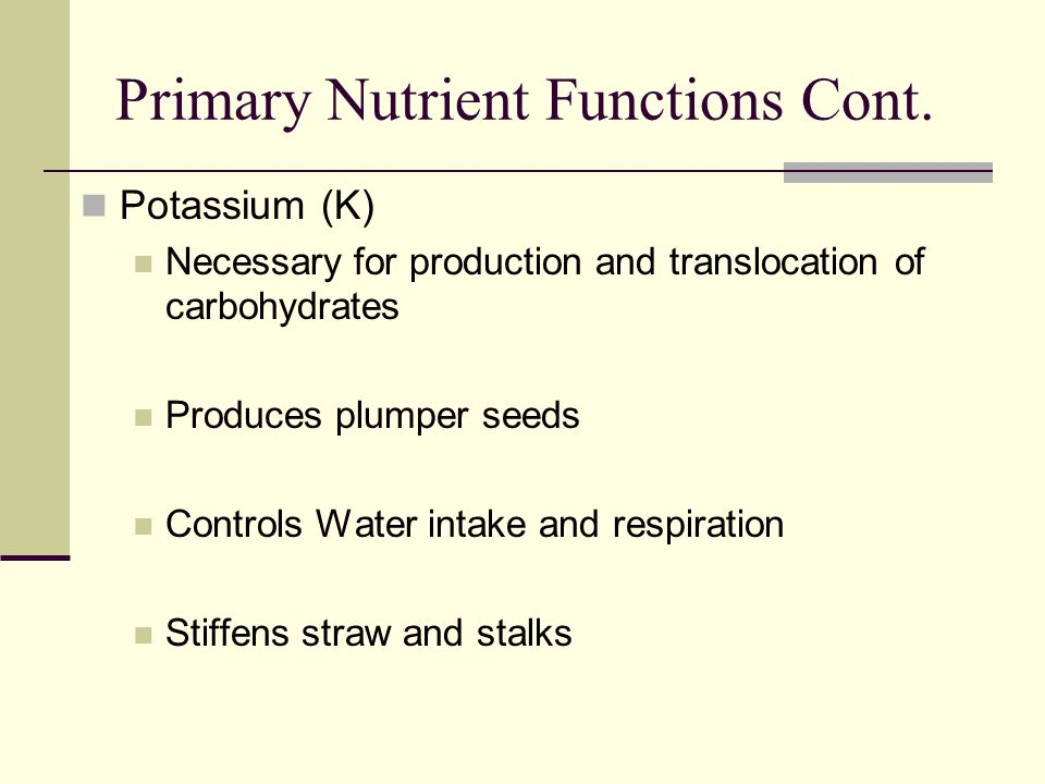 Primary nutrient deficiency symptoms Phosphorus (P) Stunted Growth Very dark green color Purple leaves or portions of leaves in advanced stages Older