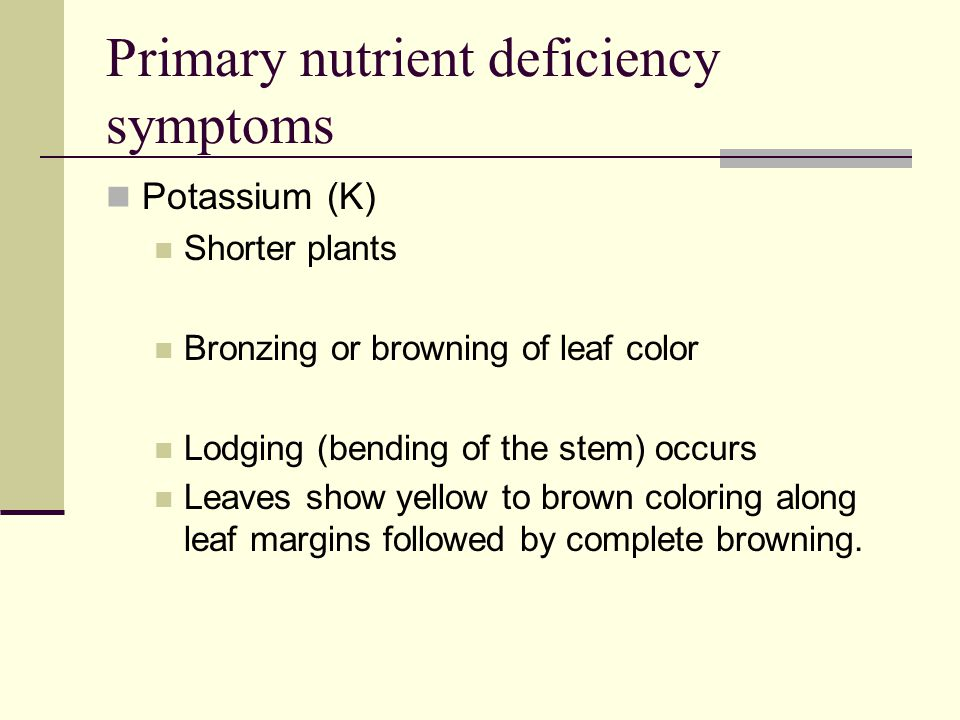 Primary Nutrient Functions Cont. Potassium (K) Necessary for production and translocation of carbohydrates Produces plumper seeds Controls Water intak