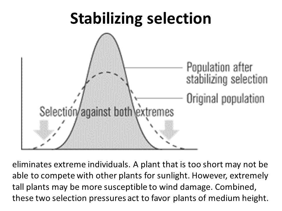 Stabilizing selection eliminates extreme individuals. A plant that is too short may not be able to compete with other plants for sunlight. However, ex