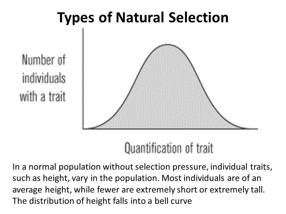 Types of Natural Selection In a normal population without selection pressure, individual traits, such as height, vary in the population. Most individu