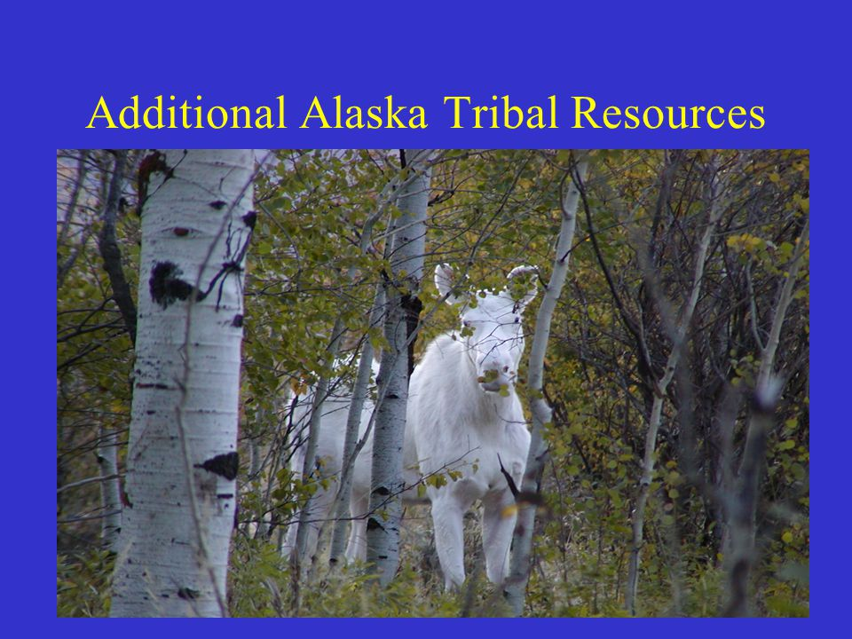 ADOT&PF Policy & Procedure 01.03.010 POLICY The Department is committed to consulting with tribes in Alaska as early in the Department's decision-making process as practicable, and as permitted by law, prior to taking action or undertaking activities that significantly or uniquely affect a tribe.