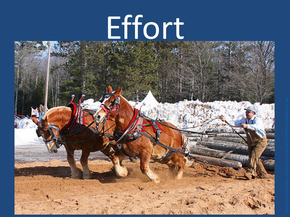 Effort http://www.cutehomepets.com/wp-content/uploads/2010/11/horse-pulling-event.png