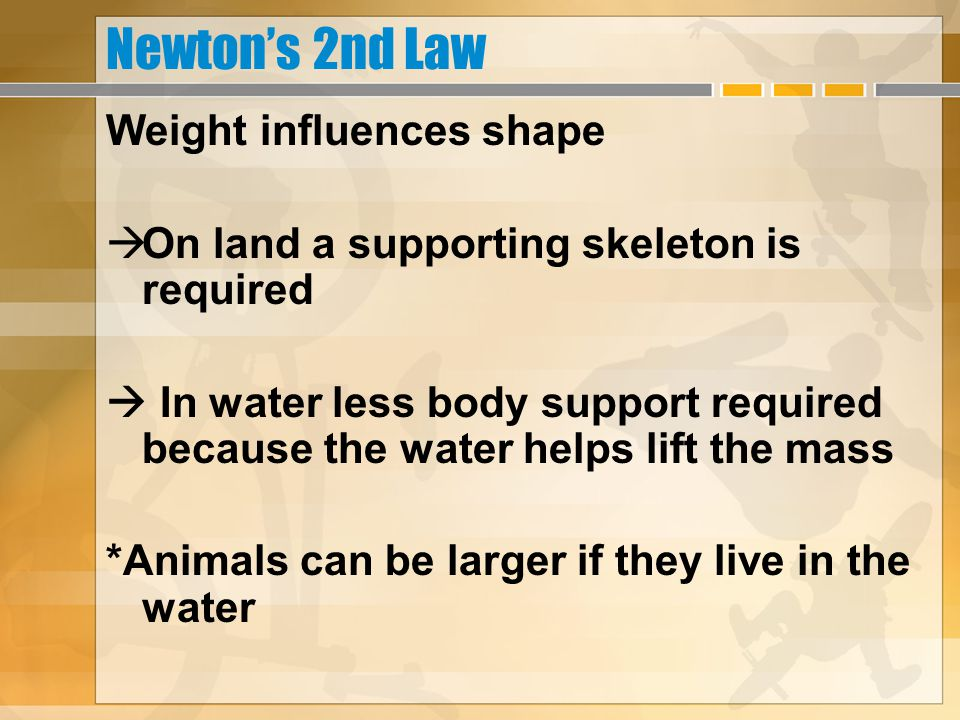 Newton's 2nd Law Weight influences shape  On land a supporting skeleton is required  In water less body support required because the water helps lif