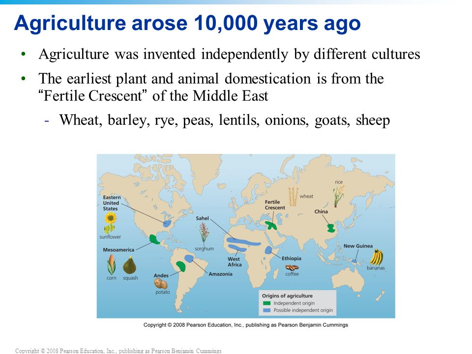 Copyright © 2008 Pearson Education, Inc., publishing as Pearson Benjamin Cummings Traditional agriculture Traditional agriculture = biologically powered agriculture, using human and animal muscle power -Subsistence agriculture = families produce only enough food for themselves -Intensive agriculture = produces excess food to sell -Uses animals, irrigation and fertilizer, but not fossil fuels