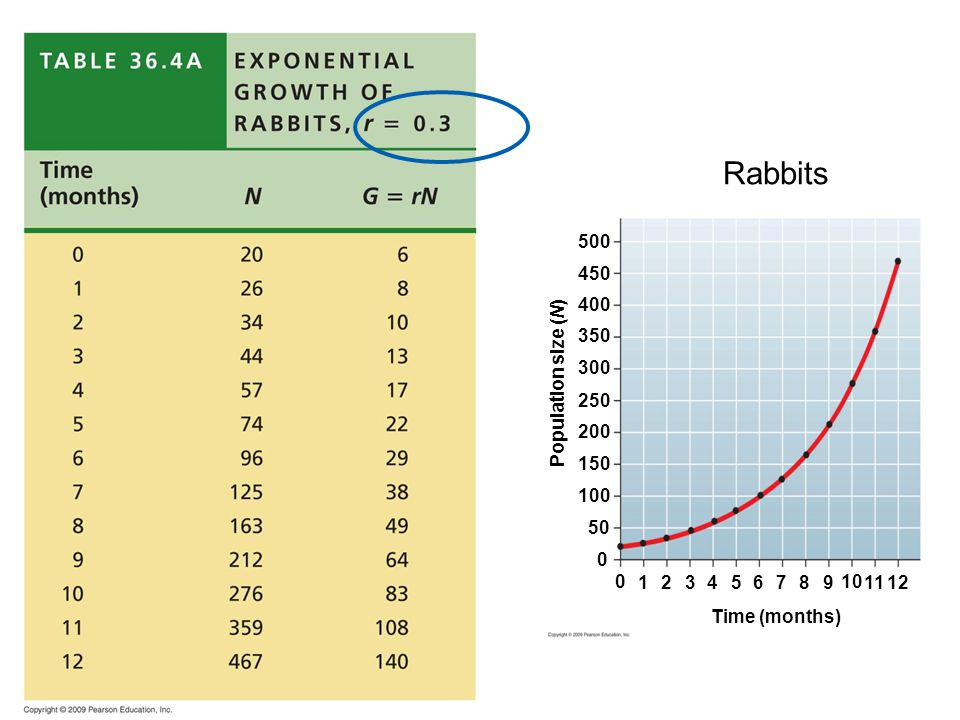 Time (months) Population size (N) 0 1 23 4 567 89 10 1112 0 50 100 150 200 250 300 350 400 450 500 Rabbits