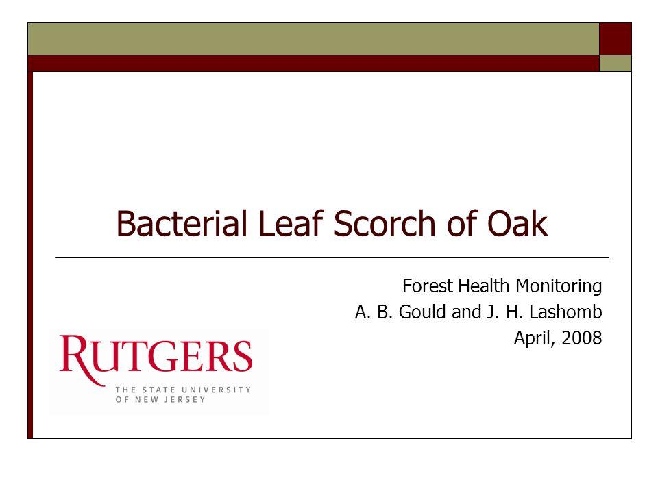 Leaf scorch of elm caused by Xylella fastidiosa.