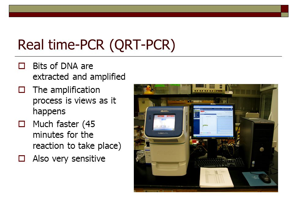 Real time-PCR (QRT-PCR)  Bits of DNA are extracted and amplified  The amplification process is views as it happens  Much faster (45 minutes for the reaction to take place)  Also very sensitive