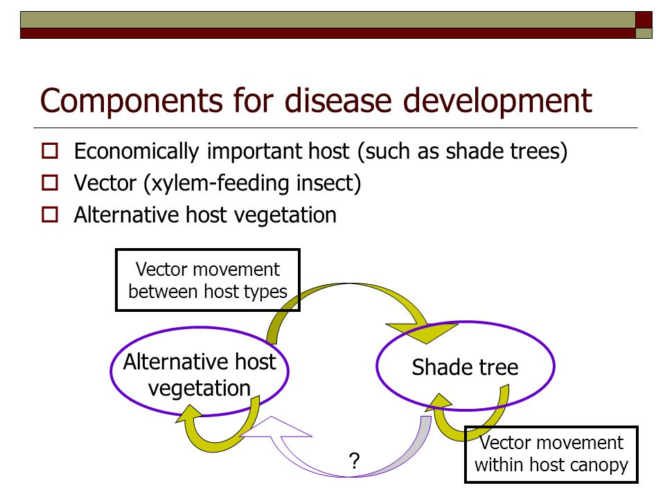 Components for disease development  Economically important host (such as shade trees)  Vector (xylem-feeding insect)  Alternative host vegetation Alternative host vegetation Shade tree Vector movement between host types Vector movement within host canopy