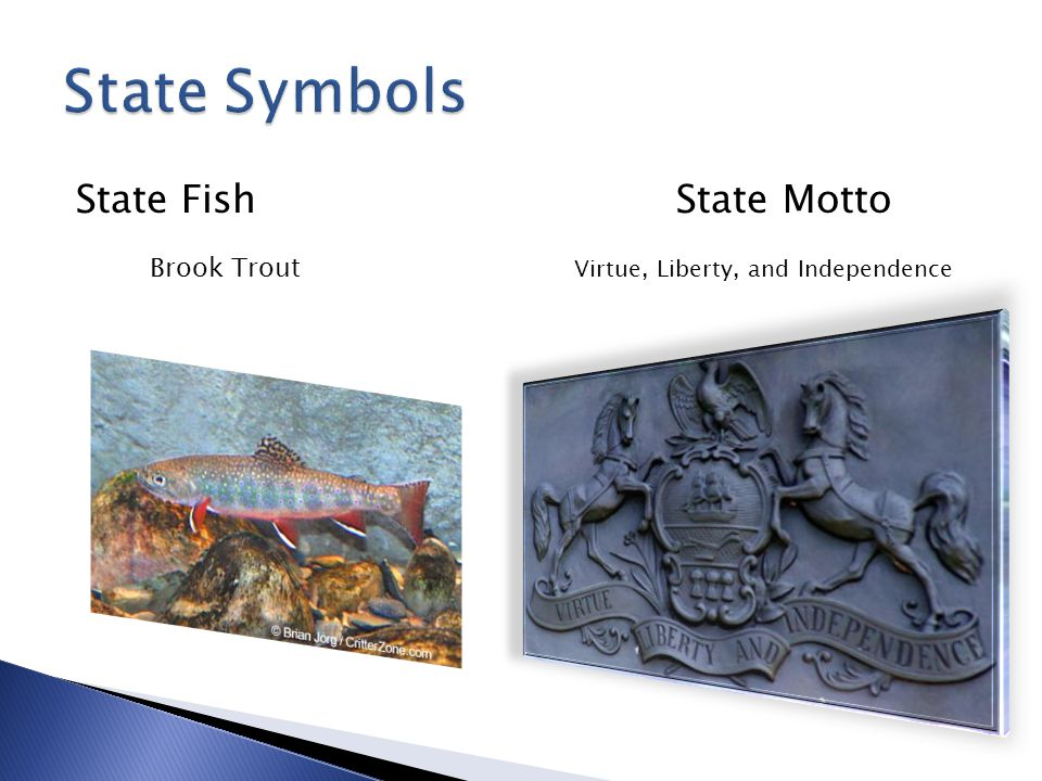 State Fish State Motto Brook Trout Virtue, Liberty, and Independence