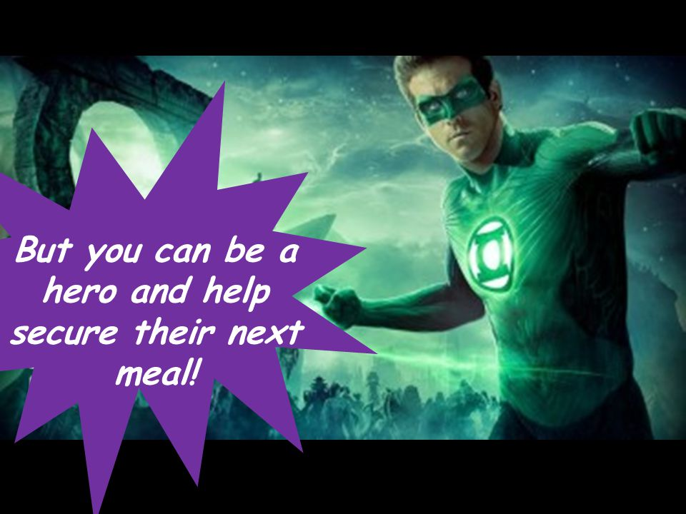 But you can be a hero and help secure their next meal!