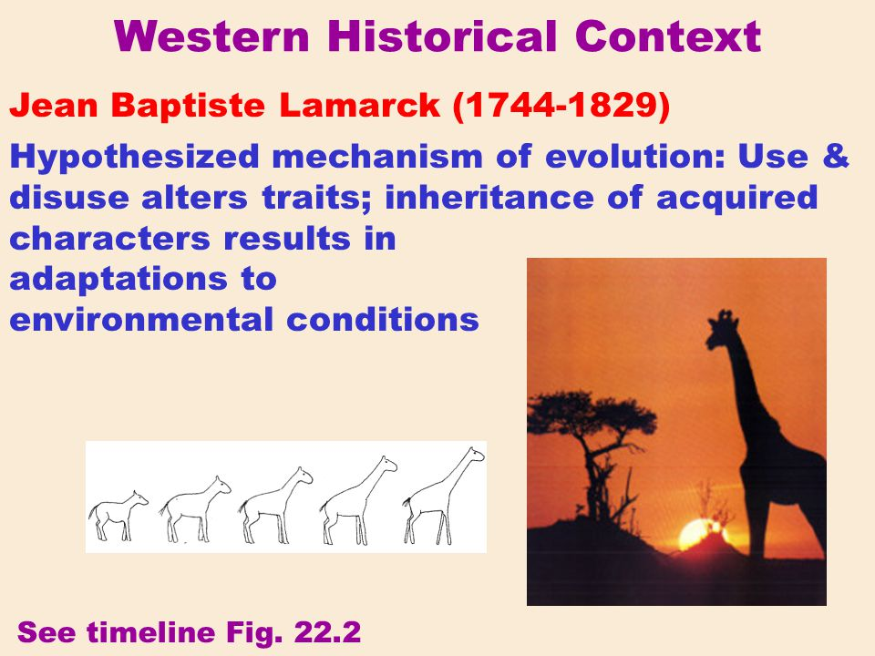 Western Historical Context Jean Baptiste Lamarck (1744-1829) Hypothesized mechanism of evolution: Use & disuse alters traits; inheritance of acquired