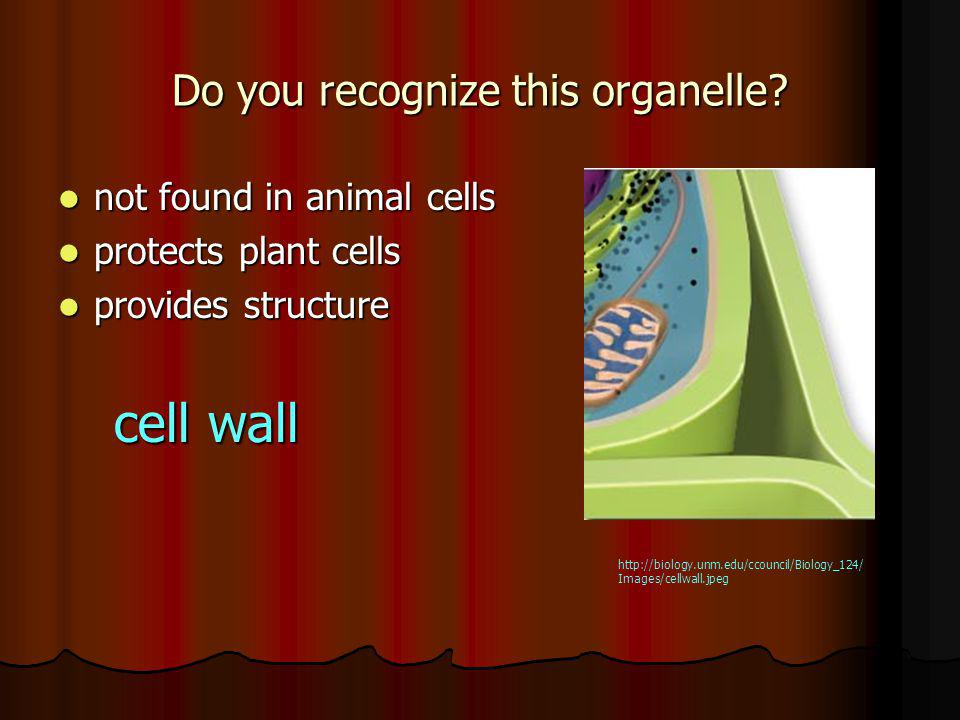 Do you recognize this organelle.