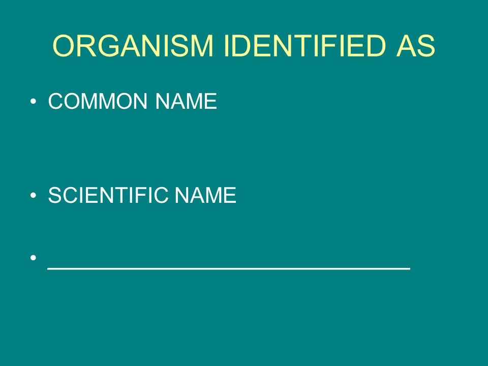 ORGANISM IDENTIFIED AS COMMON NAME SCIENTIFIC NAME ______________________________