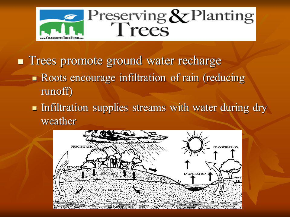 Trees promote ground water recharge Trees promote ground water recharge Roots encourage infiltration of rain (reducing runoff) Roots encourage infiltration of rain (reducing runoff) Infiltration supplies streams with water during dry weather Infiltration supplies streams with water during dry weather