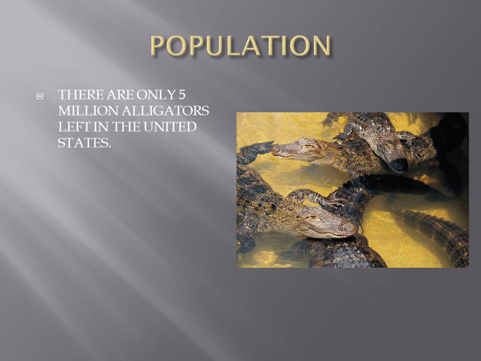  THERE ARE ONLY 5 MILLION ALLIGATORS LEFT IN THE UNITED STATES.