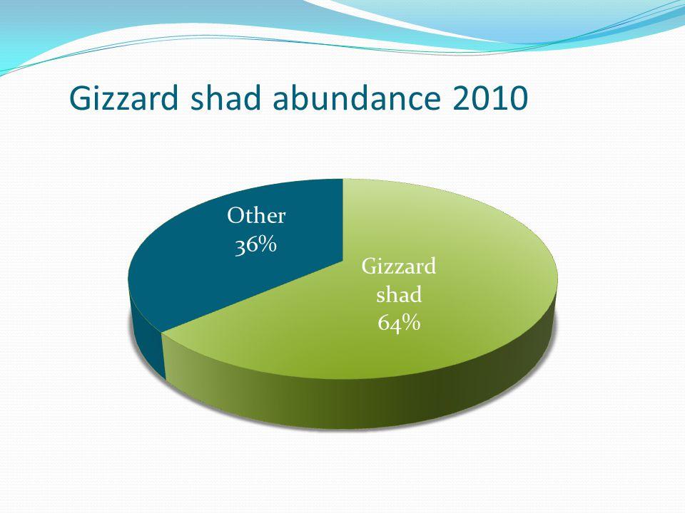 Gizzard shad abundance 2010