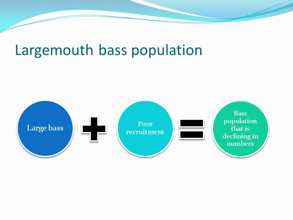 Largemouth bass population Large bass Poor recruitment Bass population that is declining in numbers