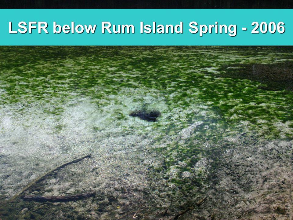 LSFR below Rum Island Spring - 2006