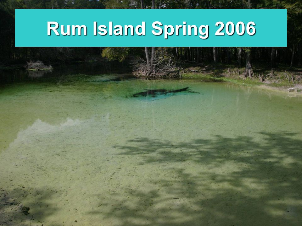 Rum Island Spring 2006