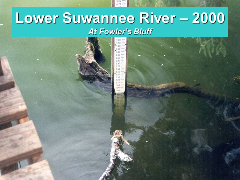 Middle Suwannee River - 2000 Above Branford