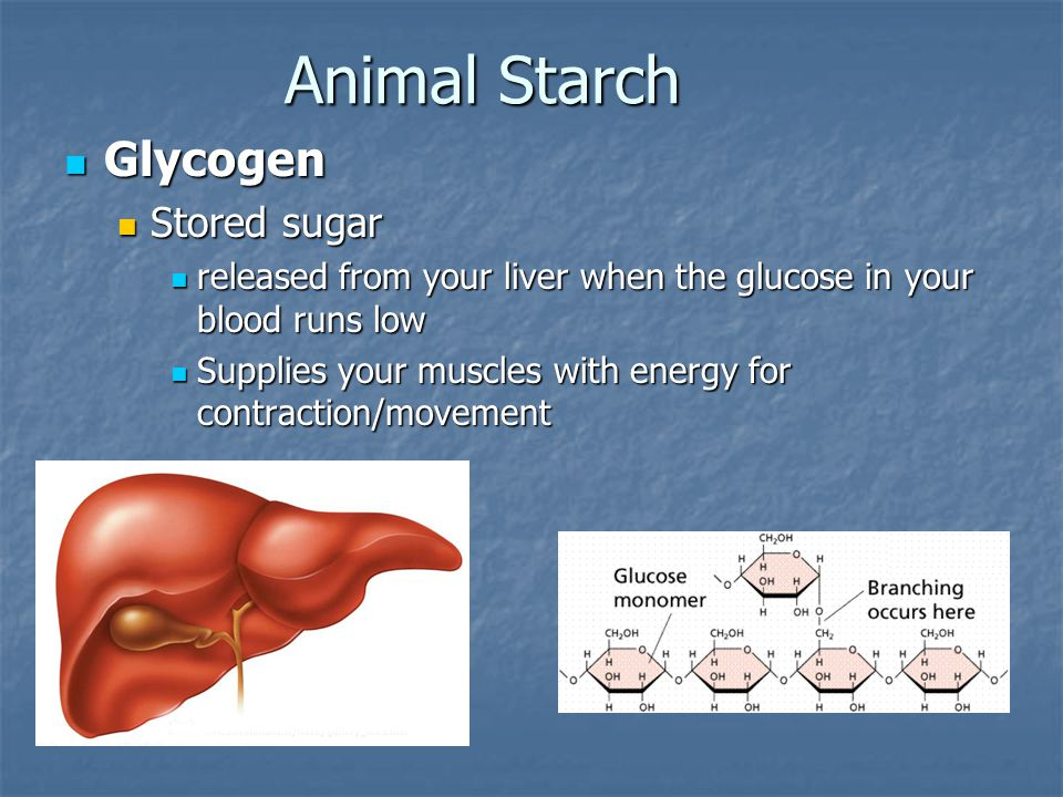 Animal Starch Glycogen Glycogen Stored sugar Stored sugar released from your liver when the glucose in your blood runs low released from your liver wh