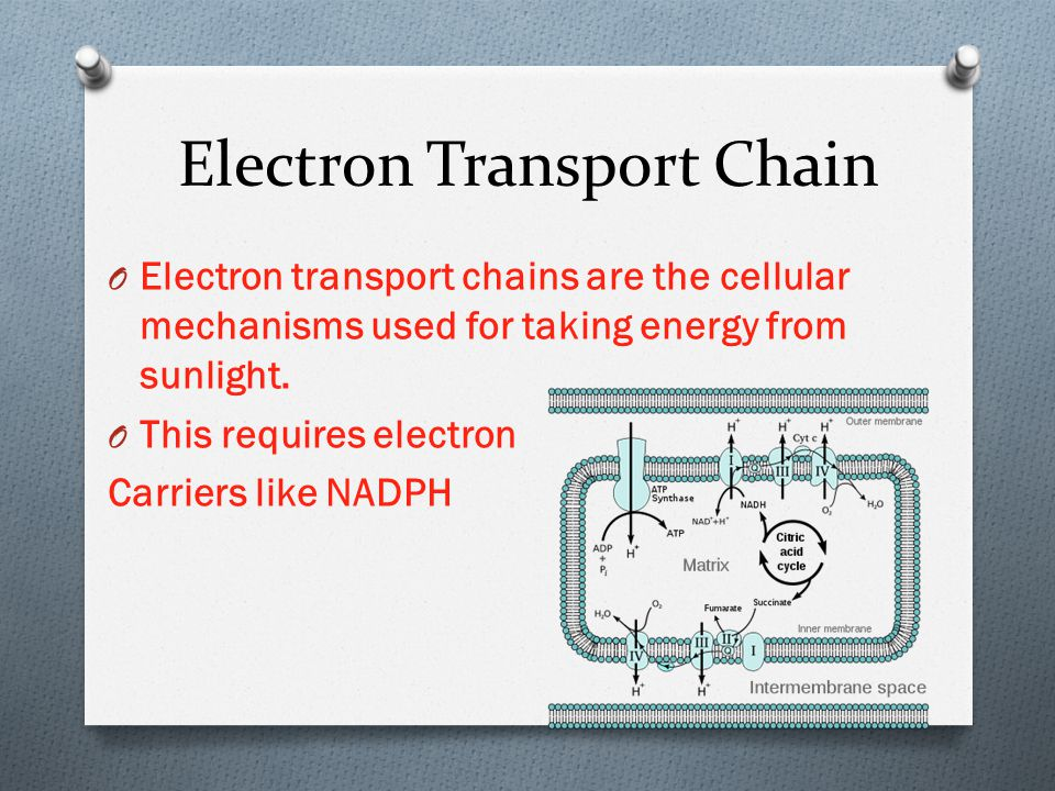 Electron Transport Chain O Electron transport chains are the cellular mechanisms used for taking energy from sunlight. O This requires electron Carrie