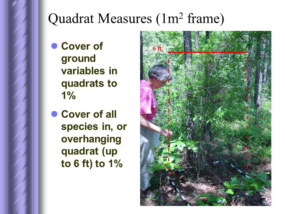 Quadrat Measures (1m 2 frame) Cover of ground variables in quadrats to 1% Cover of all species in, or overhanging quadrat (up to 6 ft) to 1% 6 ft.