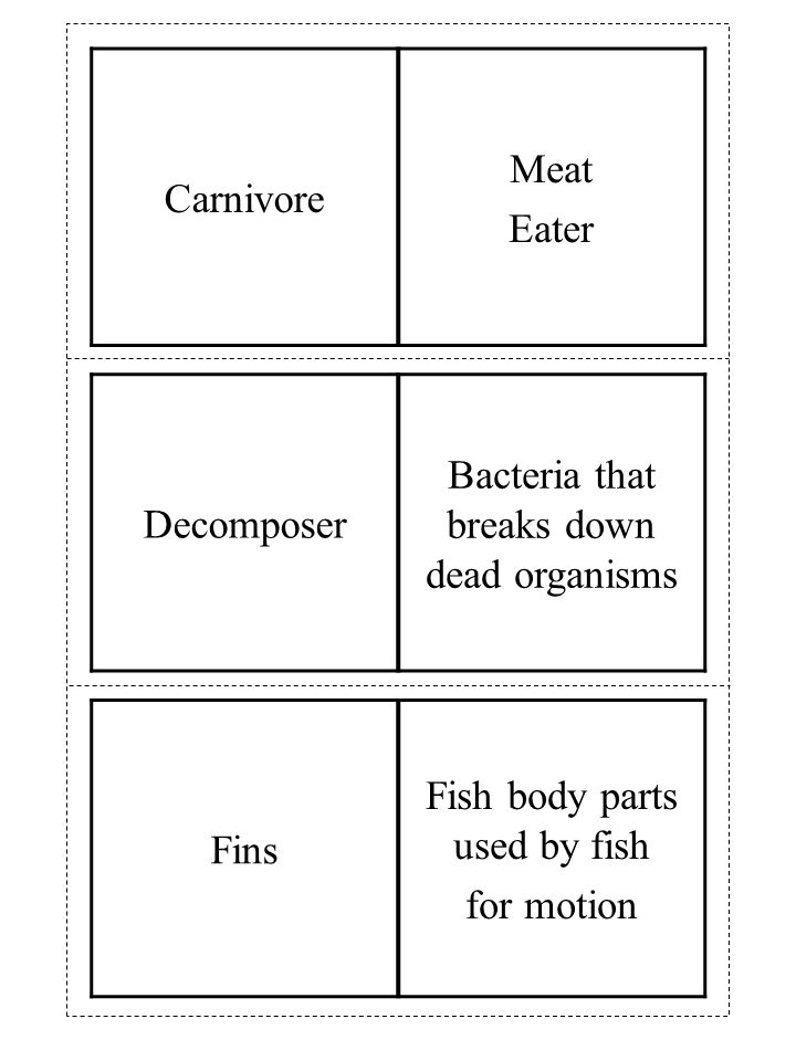 Fins Fish body parts used by fish for motion Decomposer Bacteria that breaks down dead organisms Carnivore Meat Eater
