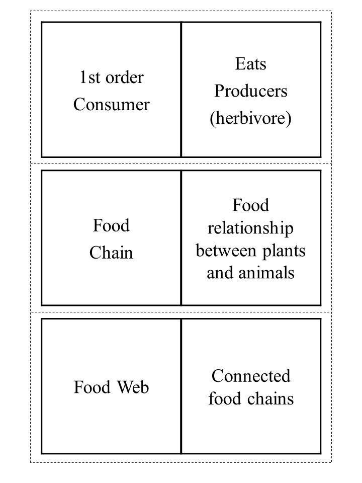 Food Web Connected food chains Food Chain Food relationship between plants and animals 1st order Consumer Eats Producers (herbivore)