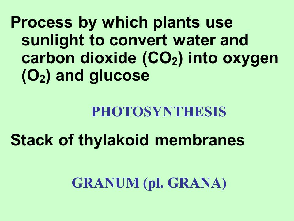 Process by which plants use sunlight to convert water and carbon dioxide (CO 2 ) into oxygen (O 2 ) and glucose Stack of thylakoid membranes PHOTOSYNT