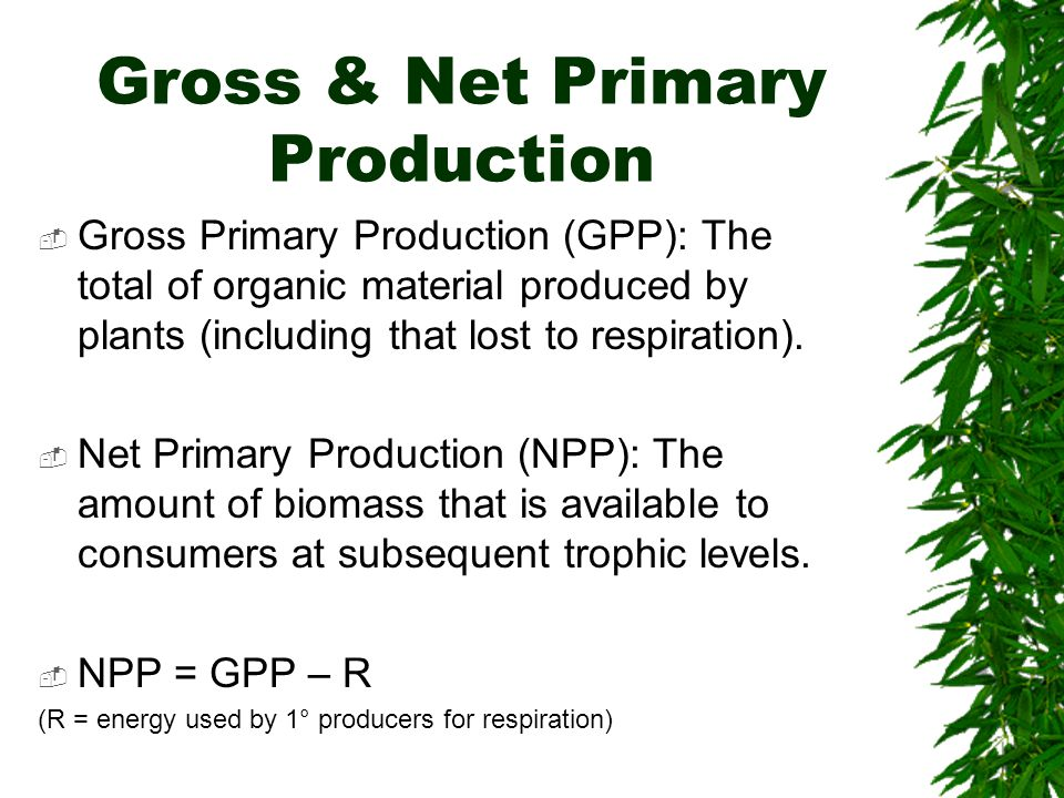 Gross & Net Primary Production  Gross Primary Production (GPP): The total of organic material produced by plants (including that lost to respiration)