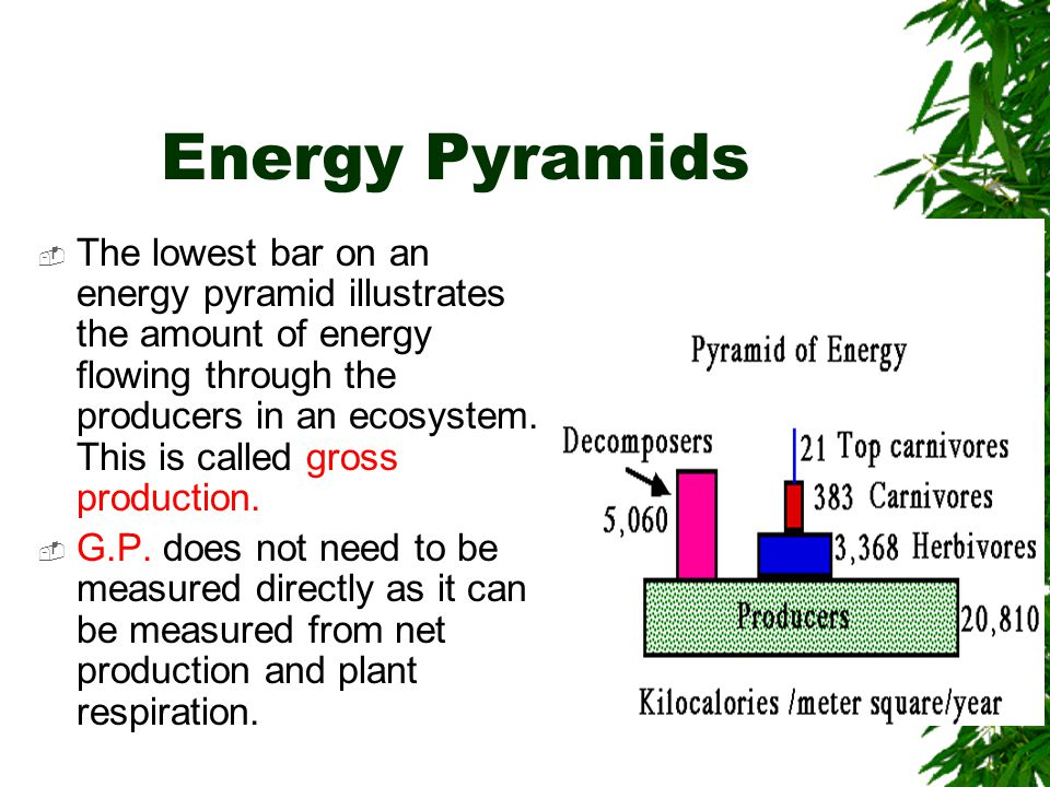 Energy Pyramids  The lowest bar on an energy pyramid illustrates the amount of energy flowing through the producers in an ecosystem. This is called g