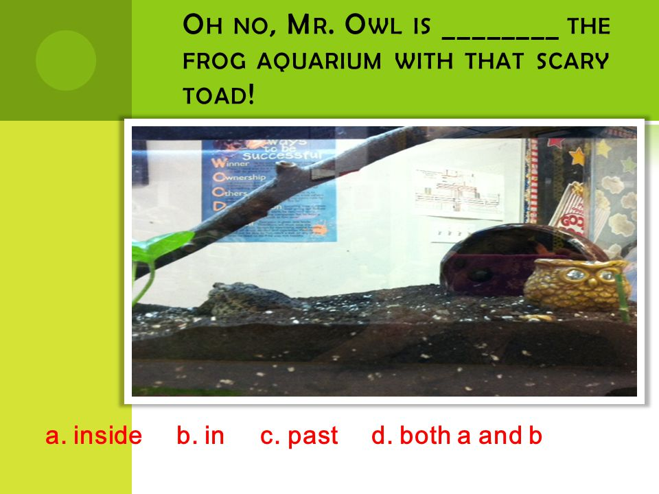 O H NO, M R.O WL IS ________ THE FROG AQUARIUM WITH THAT SCARY TOAD .