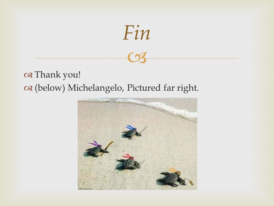  Fin  Thank you!  (below) Michelangelo, Pictured far right.