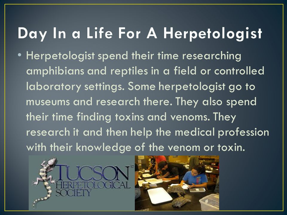 Herpetologist spend their time researching amphibians and reptiles in a field or controlled laboratory settings. Some herpetologist go to museums and