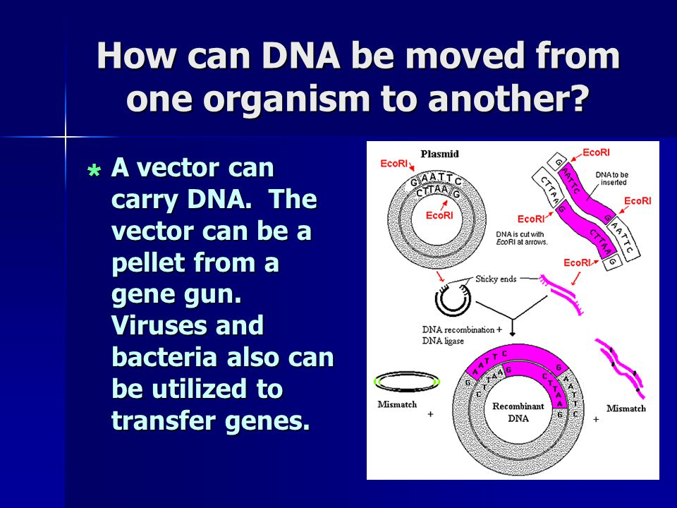 How can DNA be moved from one organism to another.