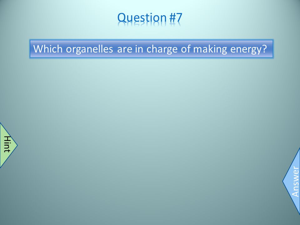 Mitochondria Answer Bean shape Hint Which organelles are in charge of making energy?