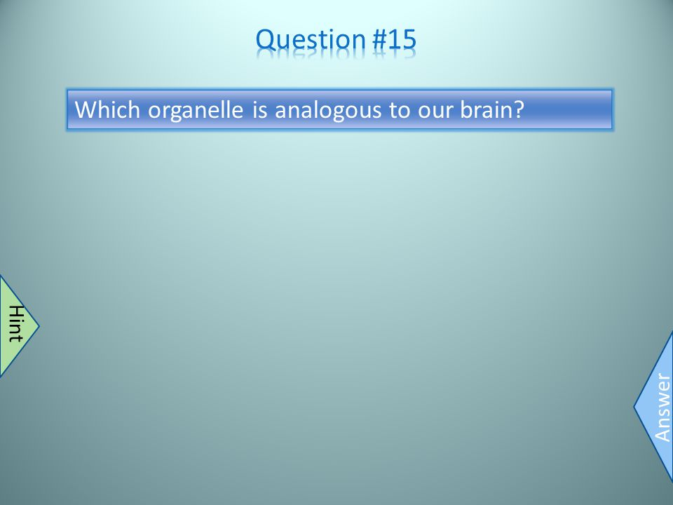 Nucleus Answer Controls stuff Hint Which organelle is analogous to our brain?