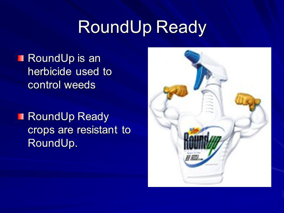 RoundUp Ready RoundUp is an herbicide used to control weeds RoundUp Ready crops are resistant to RoundUp.