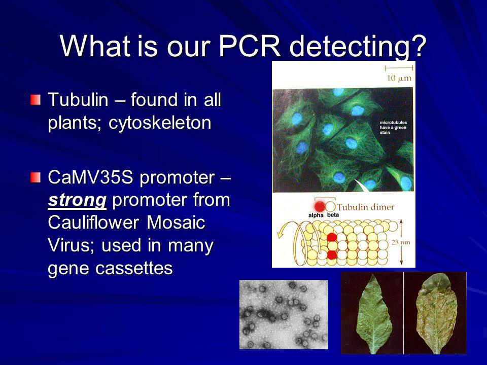 What is our PCR detecting.