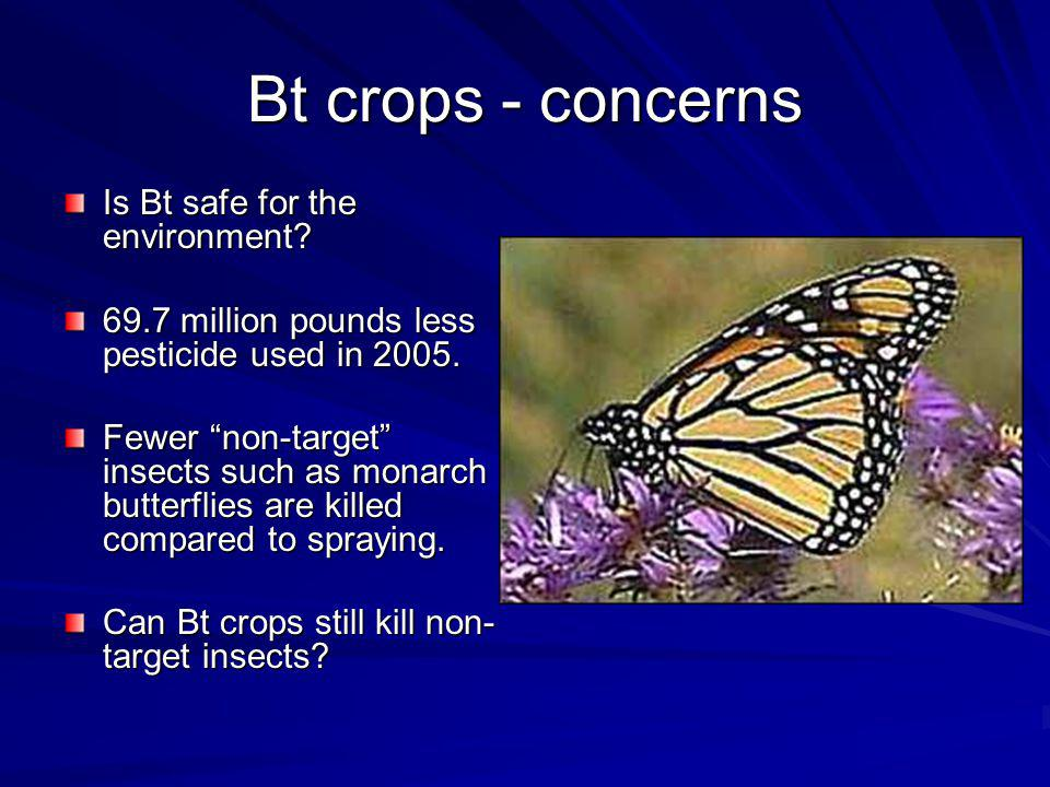 Bt crops - concerns Is Bt safe for the environment.