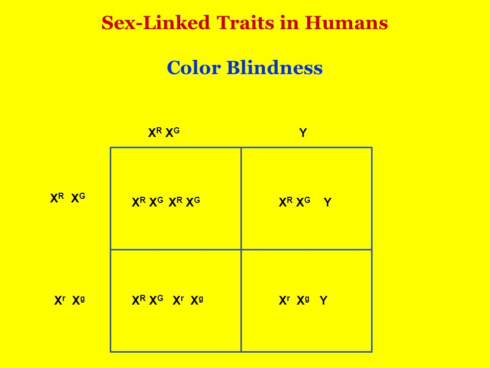 Sex-Linked Traits in Humans Color Blindness X R X G X r X g Y X R X G X r X g Y Y X R X G