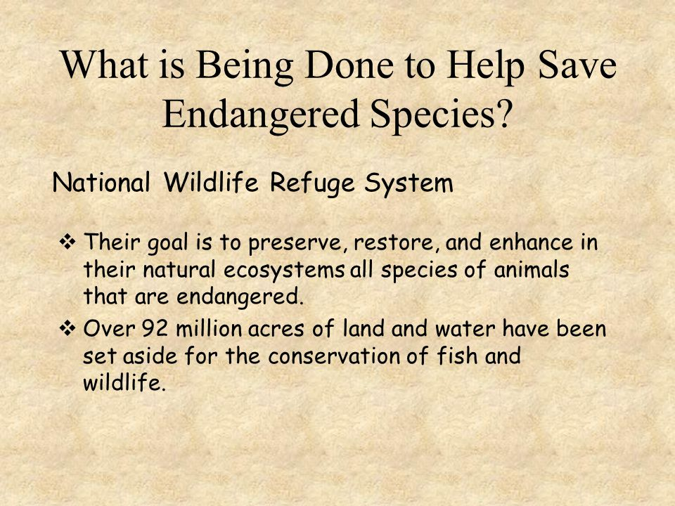 What is Being Done to Help Save Endangered Species?  In 1973 the Endangered Species Act was passed by the US government to protect animals.  Accordi