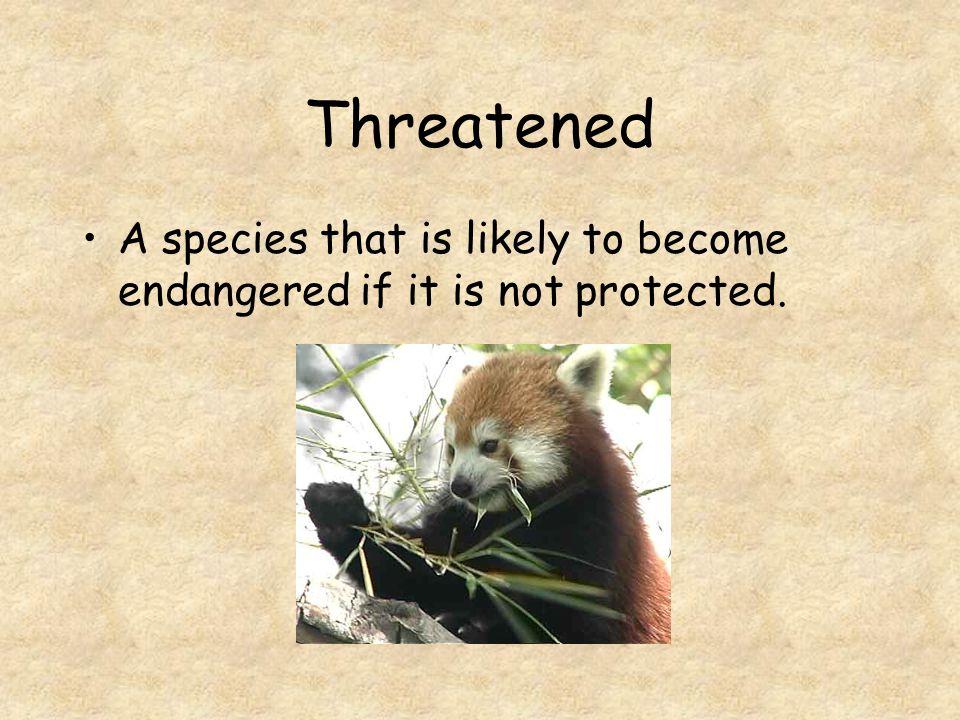 Endangered Endangered animals are still living today but are in immediate danger of extinction.